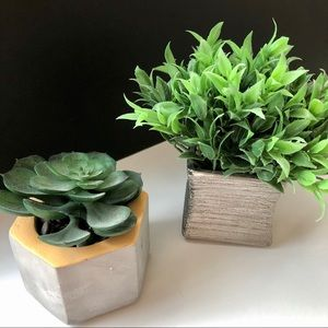 Two decorative faux small plants- succulent & fern